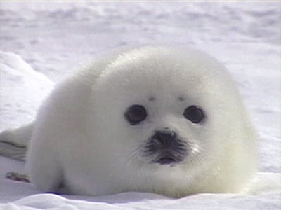 What Is the Meaning of Spirituality? Cute-baby-seal