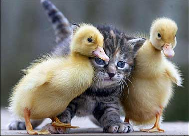 What Is the Meaning of Spirituality? Kitten_ducks